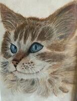 cat, coloured pencil